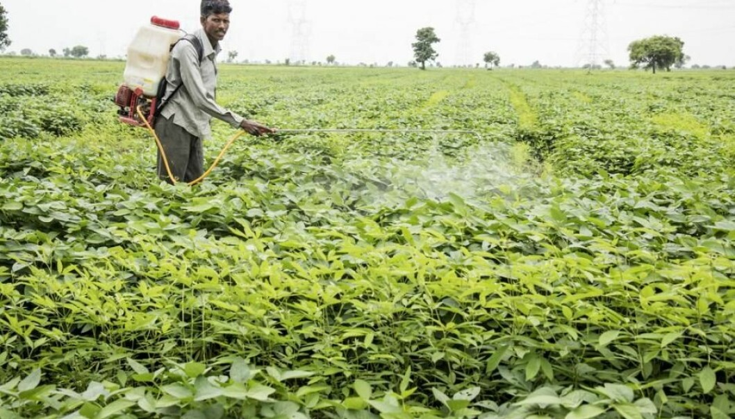 Many thousands of people commit suicide each year by consuming poisonous pesticides instead of spreading them on the fields. (Photo: Shutterstock)