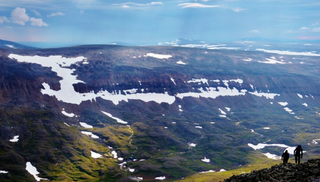 Many rare species can only be found in areas of late-lying snow packs. The disappearance of these unique environments would have severe consequences on cold-region biodiversity. (Photo: Elina Puhjo)