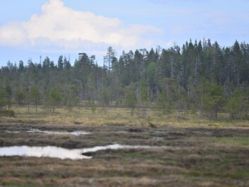 Natural peatland areas like this are the preferred habitat for many birds in northern Europe. Loss of these habitats are linked to falling bird populations according to the new study. (Photo: Aleksi Lehikoinen)
