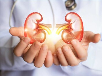 Kidney function plays an important role for our health and helps to regulate blood pressure. (Photo: Shuttestock)