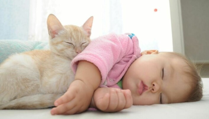Cats protect newborns against asthma