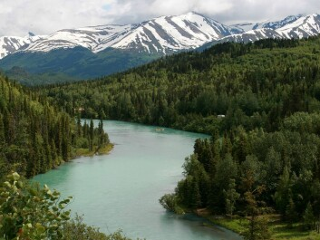 Sport and commercial fisheries along the glacial Kenai River generate millions of dollars of income for the state of Alaska. But this fluctuates due to more variable river flow caused by an increase in glacier melt and flooding when glacial lakes upstream burst their banks. (Photo: Wikipedia)
