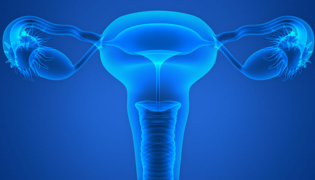 New research suggests bacteria are thriving inside the ovaries and fallopian tubes. (Photo: Shutterstock)