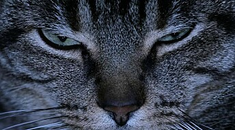 Scientist: Australia's feral cats should be eradicated