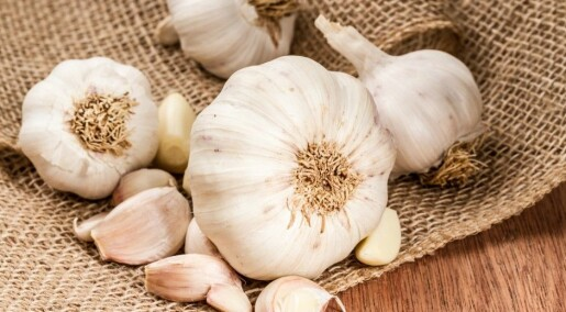 Substance from garlic combats chronic infections