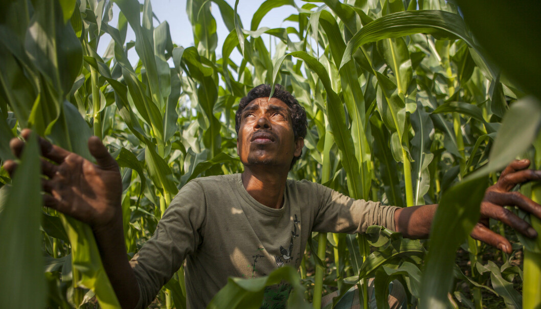 The developing world can leapfrog the West to food security, but it will take a digital revolution. (Photo: CISSA-MI_Barisal / Climate Change, Agriculture and Food Security)