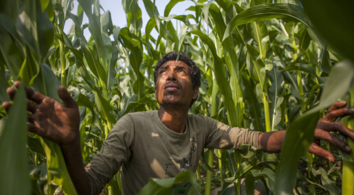 Can developing countries leapfrog the West to a new food security reality?