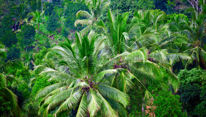 Both rainforest and peasants need protection