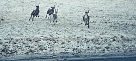 Humans curb movements of wild animals