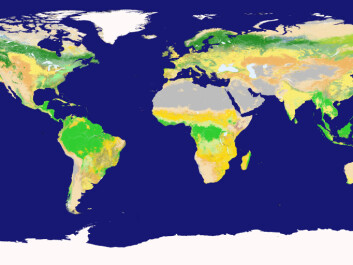 While the tropics have lots of leafy green vegetation (bright green), the most nutrient-rich soils are found across the northern hemisphere and support crop lands, indicated by the pale yellow and moss green shading. (Illustration: Boston University and NASA GSFC)
