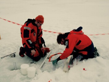 Leendert Vergeynst, Aarhus University, and Lorenz Meire, Greenland Institute of Natural Resources, collect sea ice from Godthåbsfjord in Greenland to study oil-eating microbes in Arctic seawater and sea ice. (Photo: Wieter Boone)