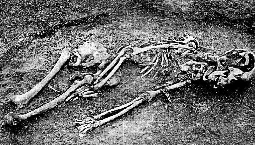 A woman buried with a sheep is typical of the graves throughout the Roman Iron Age (in the Nordic countries). Other animal species (including sheep) are found in younger periods and demonstrate Roman influence. (Photo: Kroppedal Museum)