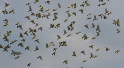 The great escape: Birds fly away from disease