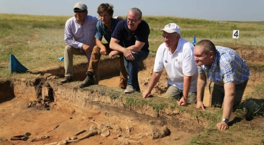 A bumper crop of ancient DNA solves key mysteries of ancient human societies
