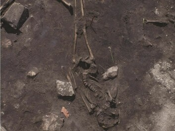 The photo shows the skeletons of two people, one on top of the other. Archaeologists believe one fell on the other, and was left there. One skull has been struck with a weapon. (Photo: Kalmar County Museum)