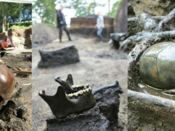 The bones at Alken Enge wetland are unusually wellpreserved thanks to the oxygen-free, environment. (Photos: Ejvind Hertz, Museum Skanderborg)