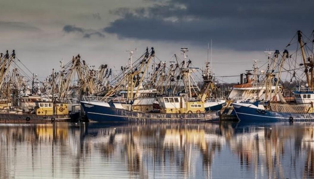 Fishing ships in Lauwersoog, The Netherlands. (Photo: Rudmer Zwerver/Shutterstock)