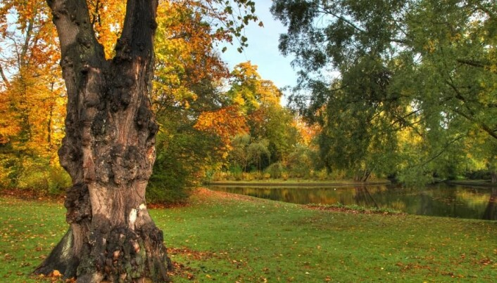 Green spaces boost your health