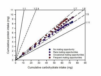 Cumulative protein- and carbohydrate consumption over 16 weeks in male cockroaches. The two solid lines show the protein:carbohydrate composition of the two artificial feed types the male cockroaches could compose their diet from. (Figure: Jensen et al.).