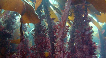 Marine forests - Nature's own carbon capture and storage