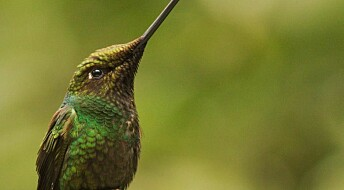 Hummingbirds are ecological super-specialists
