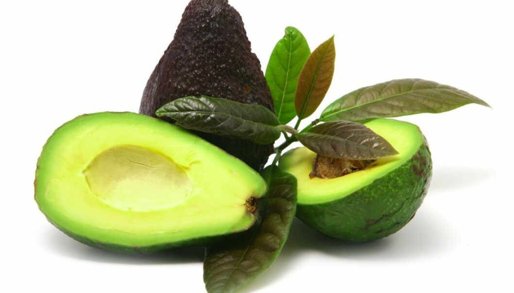 Chilean avocado plants contain substances that could help in the fight against resistant bacteria. Supplemented with traditional antibiotics, these substances can kill off even the most persistent bacteria. (Photo: Colourbox)