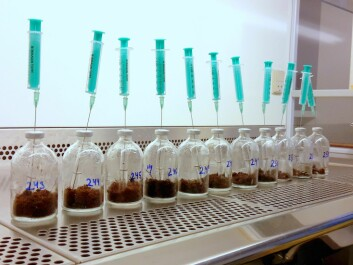 Some experiments are better suited to the laboratory than the field. Here, soil is incubated in small glass bottles to study the microbial degradation of ethanol and methanol. (Photo: Magnus Kramshøj)
