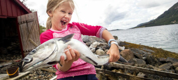 Scientists explain a fishy attraction to Norwegian waters
