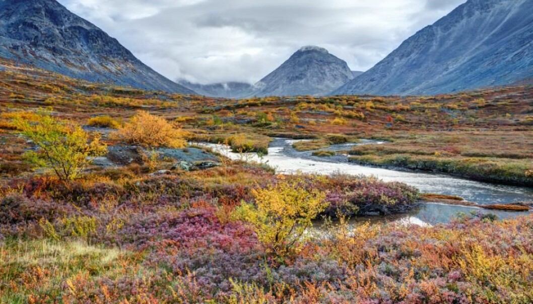 Most land areas in the Arctic are covered by tundra, but the beautiful and rich plant life is threatened by global warming. (Photo: Shutterstock)