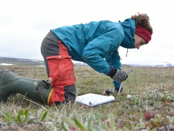 Lærke Stewart, the author of this article, collecting data in Northeast Greenland. (Photo: Lærke Stewart)