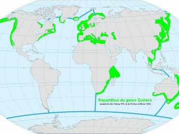 Marine eelgrasses are found in shallow seas across much of the world. (Map: gerardgiraud/wiki, CC BY-SA)