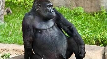 Gorilla genome casts new light on human evolution
