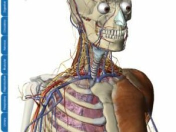 The 'Visible Body' allows the user to explore human anatomy layer by layer in three dimensions. (Screenshot: Argosy Publishing)