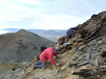 Emma Hammarlund's colleagues at work cleaning rocks in their search for the source of the fossil store. Pictured (from left): palaeontologists Jan Audun Rasmussen, Arne Torshöj Nielsen, Jakob Wallöe Hansen and Martin Stein. (Photo: Emma Hammarlund)