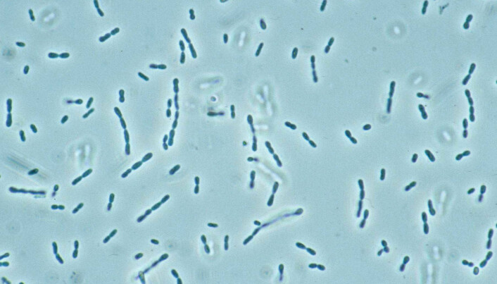 Bacteria that eat greenhouse gases
