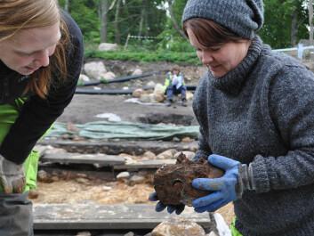 Tove Stjärna picks up one of the skulls in the excavation. (Photo: Fredrik Hallgren)