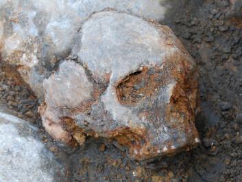 Cranium of a woman found at the site. (Photo: Fredrik Hallgren)