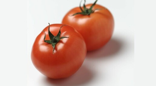 Tomatoes used to taste bad. Not anymore.