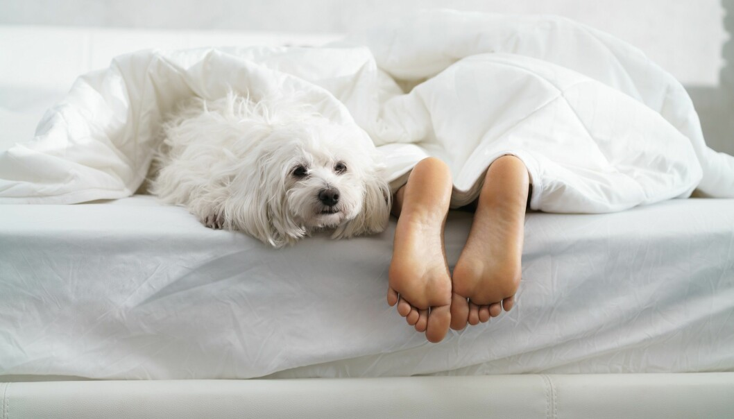An unstressed owner = an unstressed dog, according to new research. (Illustration photo: Colourbox)