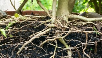 Wax on, wax off: What do plant roots and karate have in common?
