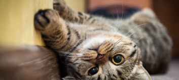 Your cat meows mostly for you