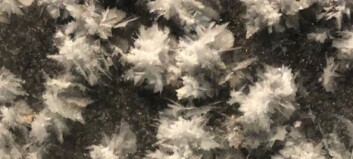 Picking frost flowers in the Polar night