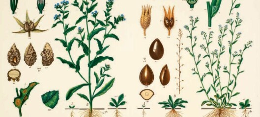 Emil Korsmo's goal was to beat back weeds. But the wall charts he made of the bothersome plants were beautiful and popular