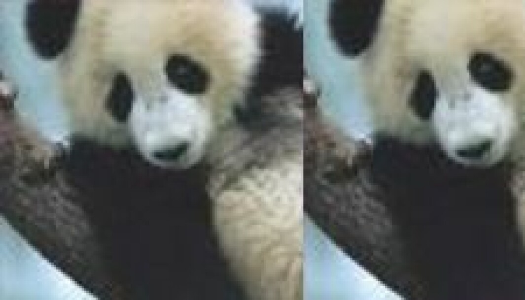 These two pictures show how one can trick a program based on deep learning. Even though they are extremely similar, a computer will believe that the one on the left shows a panda, while the one on the right shows a gibbon.