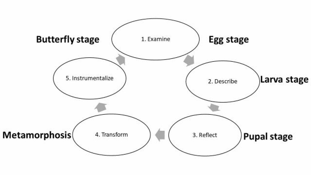 Figure: The five steps of the butterfly model.