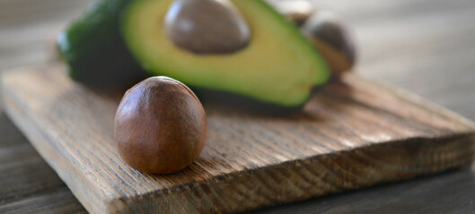 Why does the avocado have such huge seeds?Meet the plants that have lost their enormous partners
