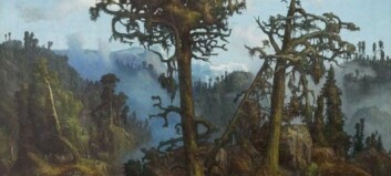 Do we still remember what the forest really looks like?