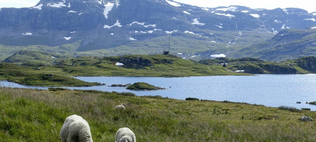 Browner, but better water in Norwegian lakes