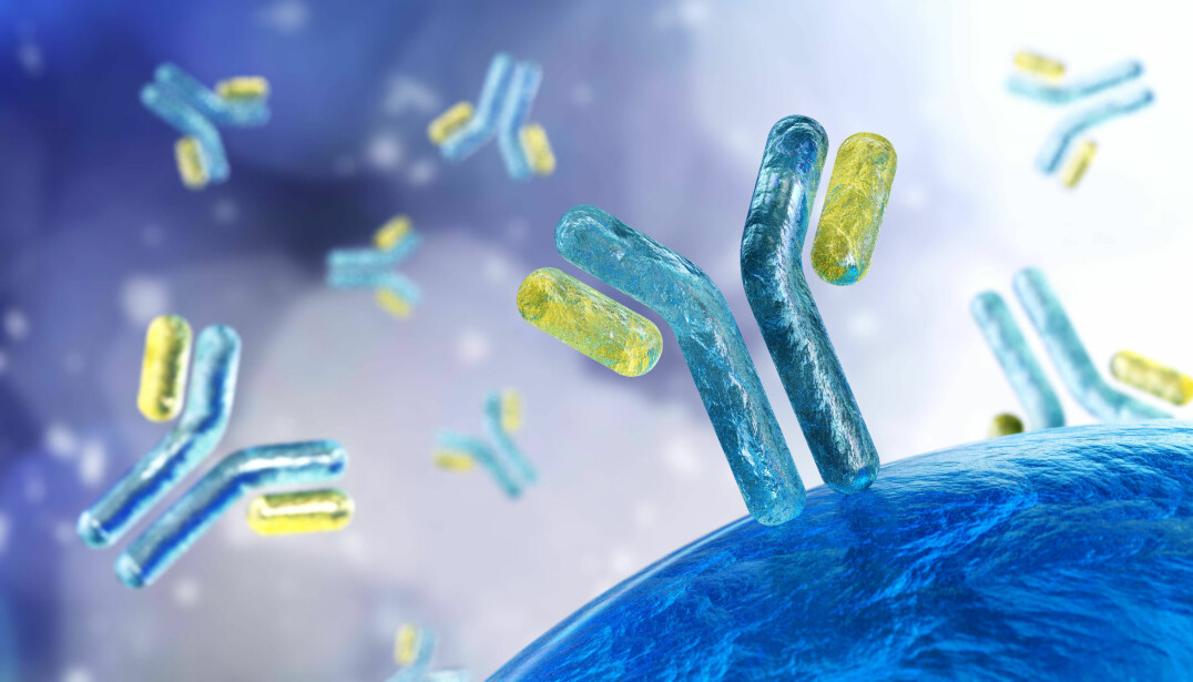 »Antibodies are a natural part of our immune systems and are produced by the white blood cells in our body. Their job is to battle viral, parasitic, and bacterial infections that we encounter throughout our lives.«