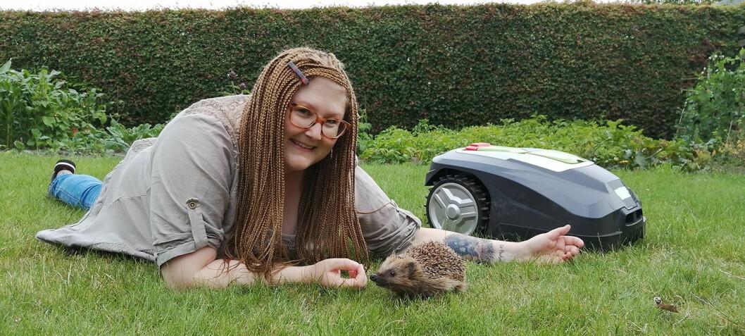 Do robotic lawn mowers hurt hedgehogs? Dr Hedgehog has the answer